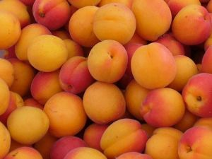 apricot bunch 1